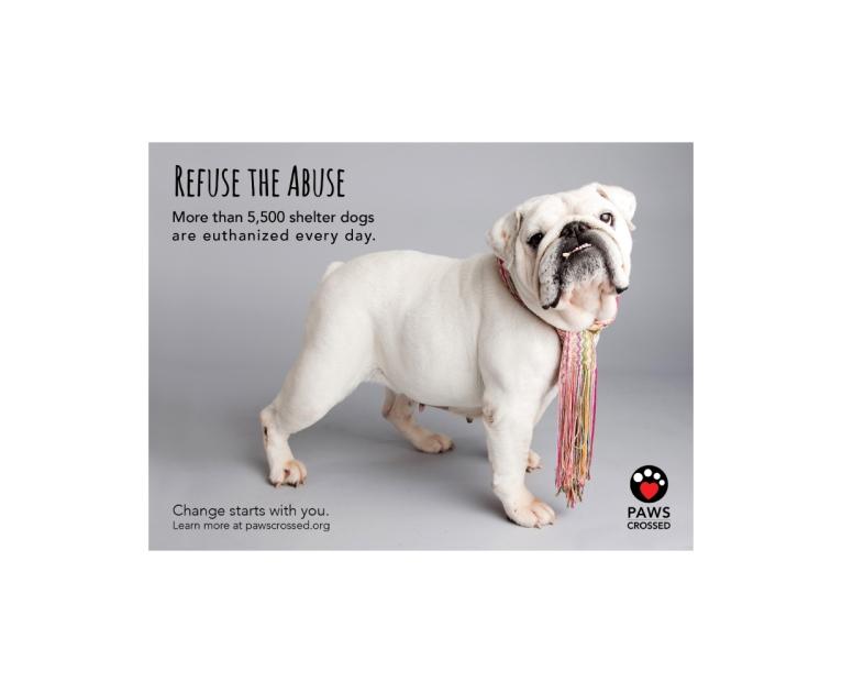 Pet-Adoption-Ad-2
