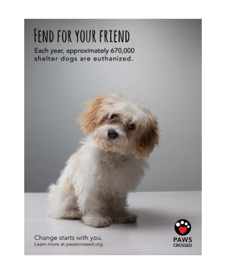 Pet-Adoption-AD